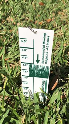 The Turf-Tec Grass Lawn height cut gauge is designed for most home lawn grass. The 1/8 inch thick plastic gauge shows the proper cutting height of 3.5 to 4.0 inches for Saint Augustine Grass, Tall Fescue, Bluegrass and Ryegrass varieties.