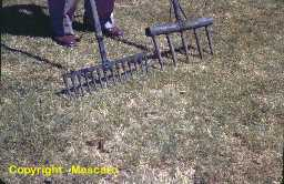 Solid tine forks were the only method of turfgrass aerification.