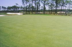Old Collier Golf Club, Naples, FL.  Seashore Paspalum on fairways.  The course was being grown in and almost ready for play.