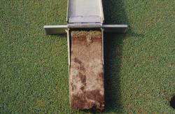 Soil profile of the same golf green after being renovated and replanted with one of the new ultra dwarf Bermuda grasses..  The profile is taken with the Mascaro Profile Sampler.