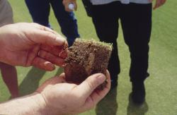 This is the close up of the Soil Profile taken with the Mascaro Profile Sampler of the seashore Paspalum on the golf green.