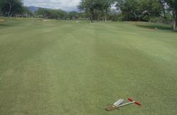 A fairway of Seashore Paspalum on New Ewa Beach Golf Club in Ewa Beach, Hawaii.  The water being used was 3600 PPM Salt and the soil was clay.  The superintendent was on a Gypsum program and the course was in the process of changing water sources.