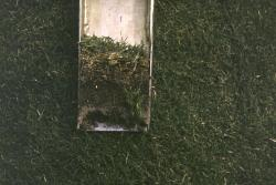 This is a soil profile taken with the Mascaro Profile Sampler at the University of Miami on another practice football field.  This field is sand based with fibers stabilizing the rootzone.  You can see one of the nylon fibers in the lower right.