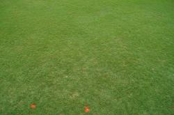 Here are some dollar spot plots at the University of Florida Turfgrass Field Day in Citra, Florida