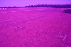 The same fertilization plots at the University of Florida with the Turf Stress Detection Glasses.