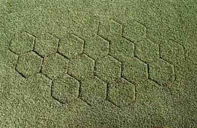 Seamless repair completed with 7 Inch Hexagon Turf Plugger on golf green